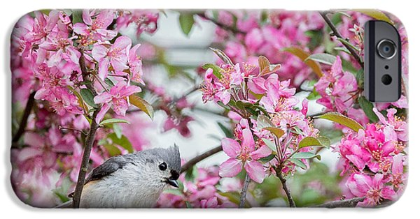 Titmouse iPhone Cases - Tufted Titmouse In A pear Tree Square iPhone Case by Bill  Wakeley