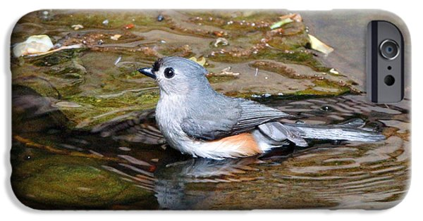 Tufted Titmouse iPhone Cases - Tufted Titmouse in Pond II iPhone Case by Sandy Keeton