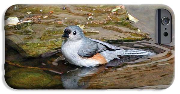 Tufted Titmouse iPhone Cases - Tufted Titmouse in Pond iPhone Case by Sandy Keeton