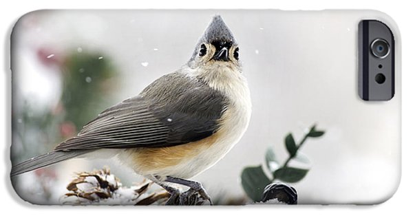 Titmouse iPhone Cases - Tufted Titmouse In The Snow iPhone Case by Christina Rollo