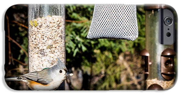 Tufted Titmouse iPhone Cases - Tufted Titmouse iPhone Case by Jim DeLillo