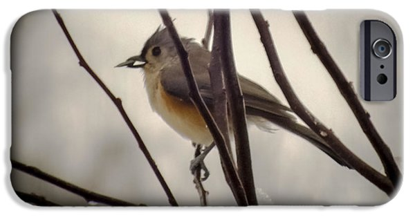 Titmouse iPhone Cases - Tufted Titmouse iPhone Case by Karen Wiles