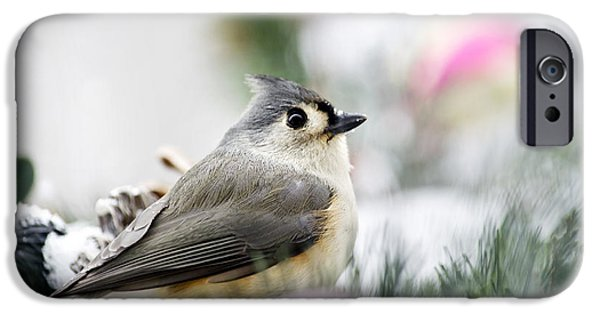 Titmouse iPhone Cases - Tufted Titmouse Portrait iPhone Case by Christina Rollo