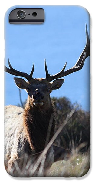 Tules Elks of Tomales Bay California - 7D21201 iPhone Case by Wingsdomain Art and Photography
