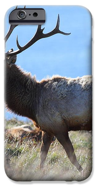 Tules Elks of Tomales Bay California - 7D21218 iPhone Case by Wingsdomain Art and Photography