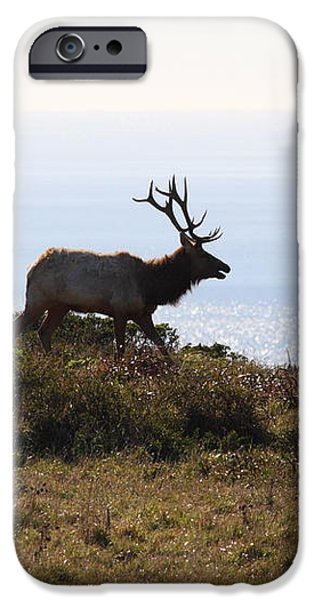 Tules Elks of Tomales Bay California - 7D21230 iPhone Case by Wingsdomain Art and Photography