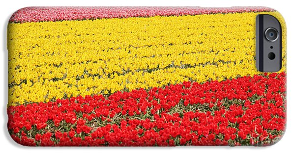 Crops iPhone Cases - Tulip fields 1 iPhone Case by Jasna Buncic