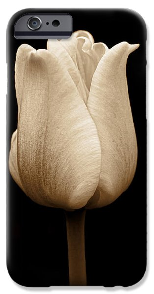 Monotone iPhone Cases - Tulip Flower in Sepia iPhone Case by Jennie Marie Schell