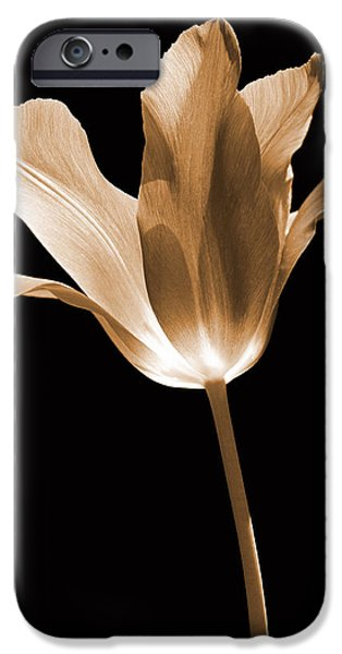 Sepia Flowers iPhone Cases - Tulip Flower Opening Sepia iPhone Case by Jennie Marie Schell