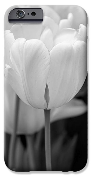 Monotone iPhone Cases - Tulip Flowers in the Garden Monochrome iPhone Case by Jennie Marie Schell