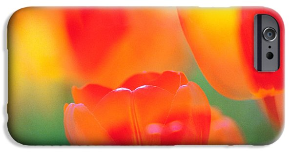 Designs In Nature iPhone Cases - Tulip Flowers iPhone Case by Panoramic Images