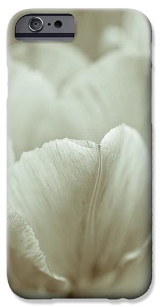 Tulip iPhone Case by Frank Tschakert