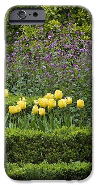 Tulip Garden iPhone Case by Frank Tschakert