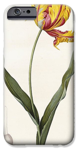 Florals iPhone Cases - Tulip iPhone Case by Pierre Joseph Redoute