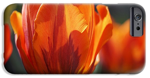 Spring Photographs iPhone Cases - Tulip Prinses Irene iPhone Case by Rona Black
