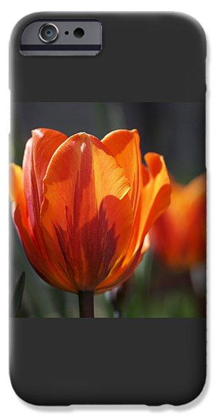 Tulip Prinses Irene iPhone Case by Rona Black