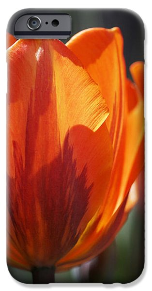 Tulip Prinses Irene iPhone Case by Rona Black