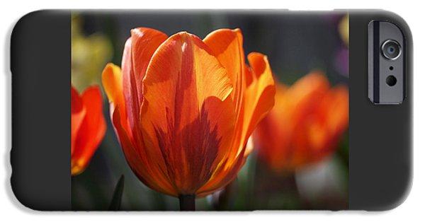 Tulips Photographs iPhone Cases - Tulip Prinses Irene iPhone Case by Rona Black