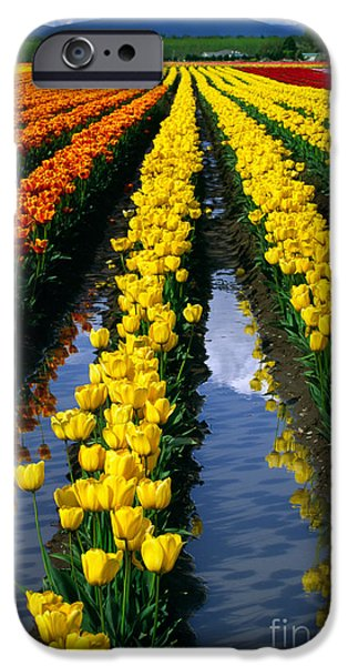 Industry iPhone Cases - Tulip Reflections iPhone Case by Inge Johnsson
