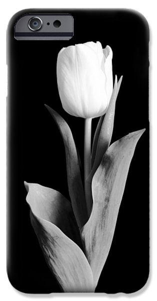 Day iPhone Cases - Tulip iPhone Case by Sebastian Musial