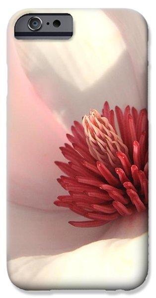 Tulip Tree Blossom iPhone Case by Carol Groenen
