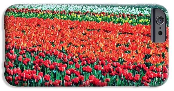 Nederland iPhone Cases - Tulipomania iPhone Case by Benjamin Yeager