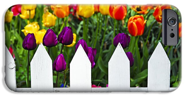 White House iPhone Cases - Tulips behind white fence iPhone Case by Elena Elisseeva