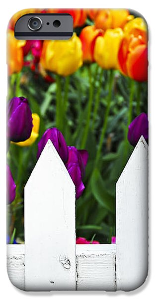 Tulips behind white fence iPhone Case by Elena Elisseeva