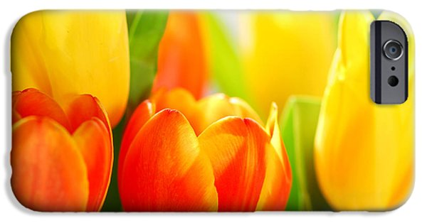 Extreme iPhone Cases - Tulips iPhone Case by Elena Elisseeva