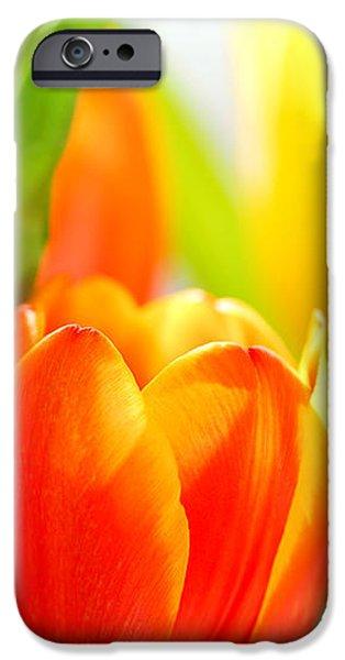 Tulips iPhone Case by Elena Elisseeva