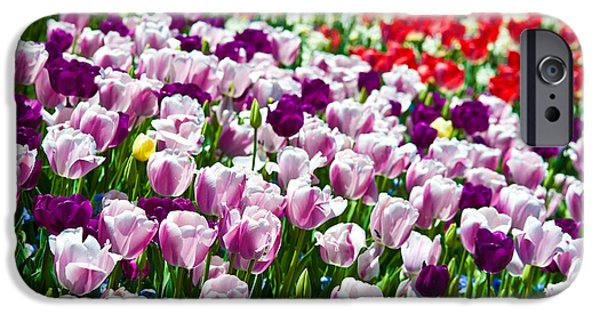 Close-up Photographs iPhone Cases - Tulips Field iPhone Case by Sebastian Musial