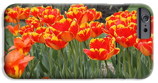 Botanical iPhone Cases - Tulips from Brooklyn iPhone Case by John Telfer