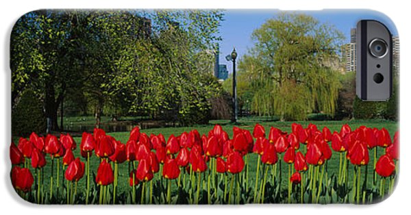 City. Boston iPhone Cases - Tulips In A Garden, Boston Public iPhone Case by Panoramic Images