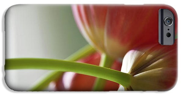 Floral Photographs iPhone Cases - Tulips In The Morning iPhone Case by Theresa Tahara