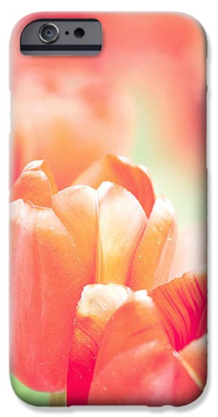 Tulips in the Sun iPhone Case by Kay Pickens