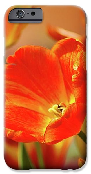 Tulips iPhone Case by Kathleen Struckle