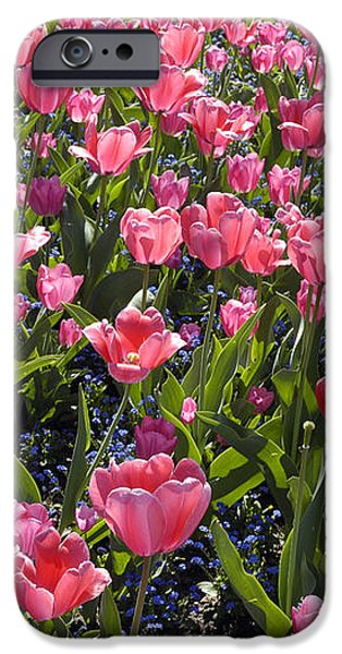 Tulips iPhone Case by Matthias Hauser