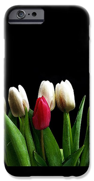 Flora Photographs iPhone Cases - Tulips On Black iPhone Case by Mark Rogan