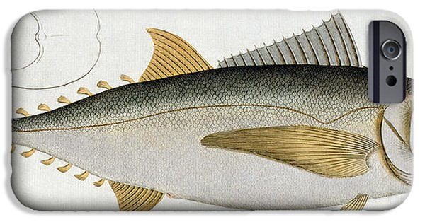 Biology Paintings iPhone Cases - Tuna iPhone Case by Andreas Ludwig Kruger