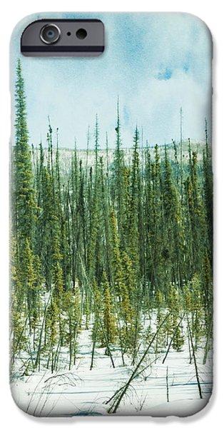 tundra forest iPhone Case by Priska Wettstein