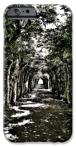Bayern iPhone Cases - Tunnel of Trees ... iPhone Case by Juergen Weiss