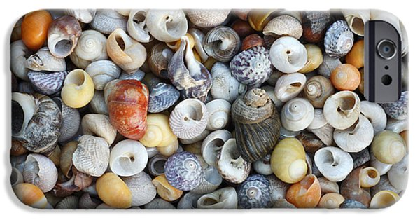 North Sea iPhone Cases - Turbinate Monodont Shells Spain iPhone Case by Duncan Usher
