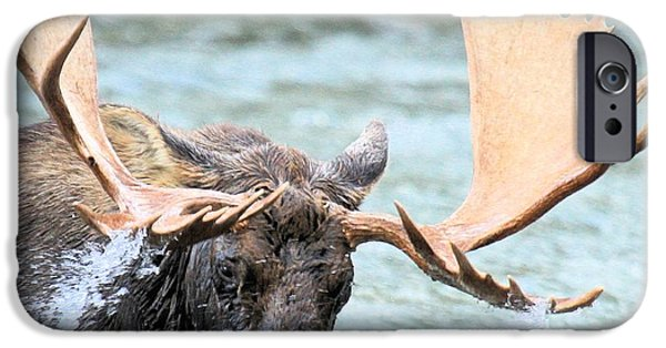 Moose In Water iPhone Cases - Turbulent Waters iPhone Case by Adam Jewell