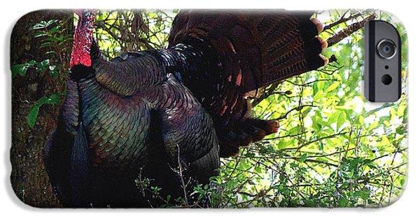 Eastern Wild Turkey iPhone Cases - Turkey 002 iPhone Case by Chris Mercer