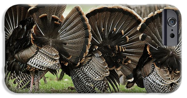 Gobbler iPhone Cases - Turkey Butt Strut iPhone Case by Gary Langley