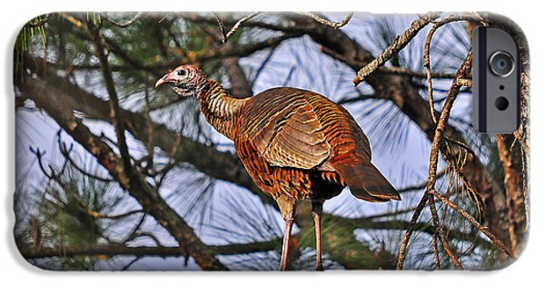 Best Sellers -  - Eastern Wild Turkey iPhone Cases - Turkey in a Tree iPhone Case by Al Powell Photography USA