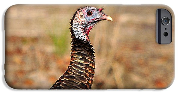 Best Sellers -  - Eastern Wild Turkey iPhone Cases - Turkey Profile iPhone Case by Al Powell Photography USA