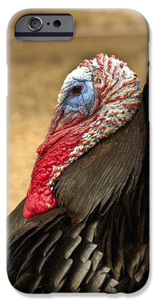 Meleagris Gallopavo iPhone Cases - Turkey Time iPhone Case by Carolyn Marshall