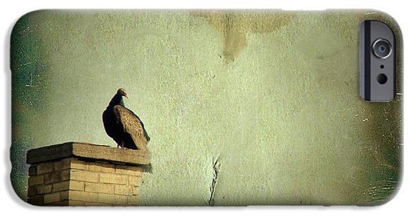 Vulture iPhone Cases - Turkey Vulture iPhone Case by Gothicolors Donna Snyder