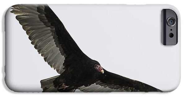 Young Turkey iPhone Cases - Turkey Vulture In Flight iPhone Case by Thomas Young